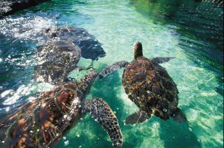 Maui top 10 iles du monde